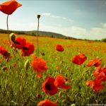 """Beautiful set of wallpapers """"Summer in Ukraine"""""""