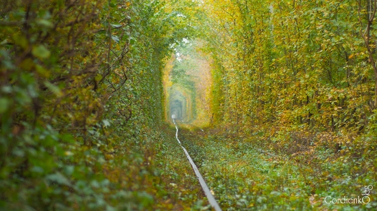 Tunnel of Love, Rivne oblast, Ukraine view 4