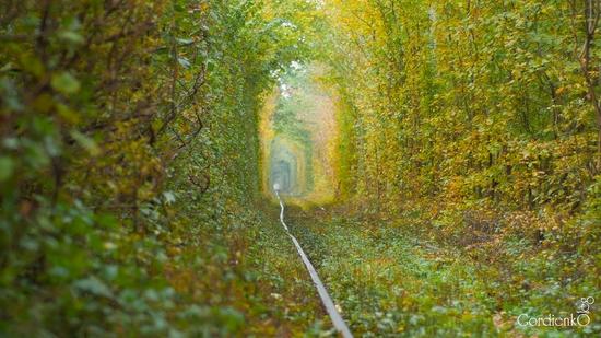 Tunnel of Love, Rivne oblast, Ukraine view 4