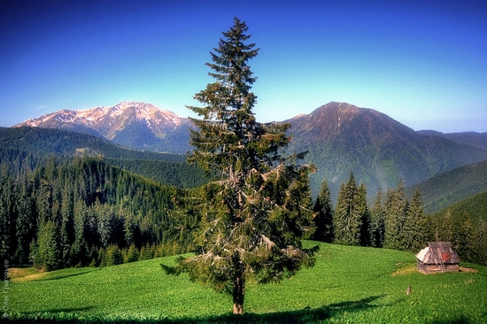 Ukrainian Carpathians landscape 6
