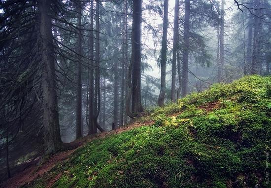 Ukrainian Carpathians landscape 7