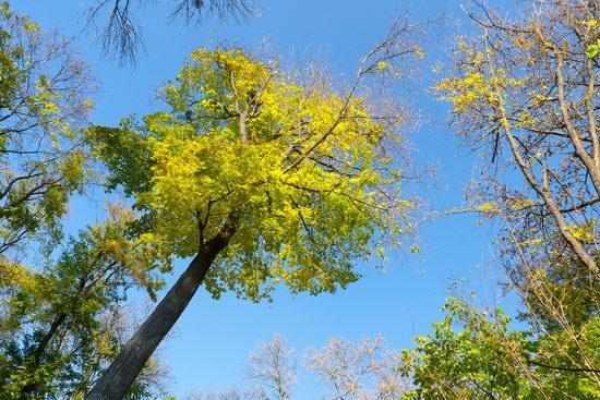 Sofiyivka dendrological park, Uman, Ukraine view 23