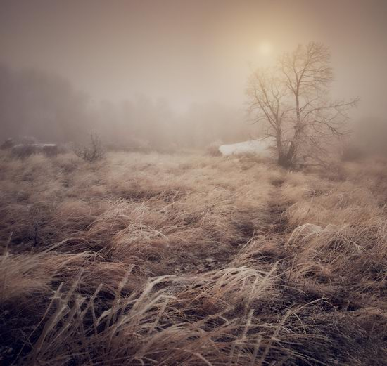 Mysteries of foggy and frozen Crimea, Ukraine view 10