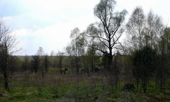 Spring in the Chernobyl exclusion zone, Ukraine view 14