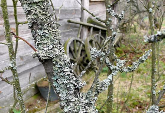 Spring in the Chernobyl exclusion zone, Ukraine view 2