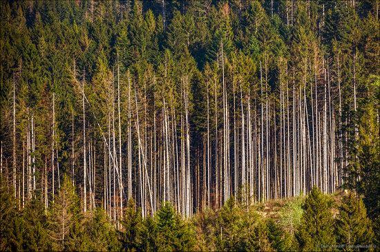 Beautiful sceneries of Zakarpattia region, Ukraine photo 11