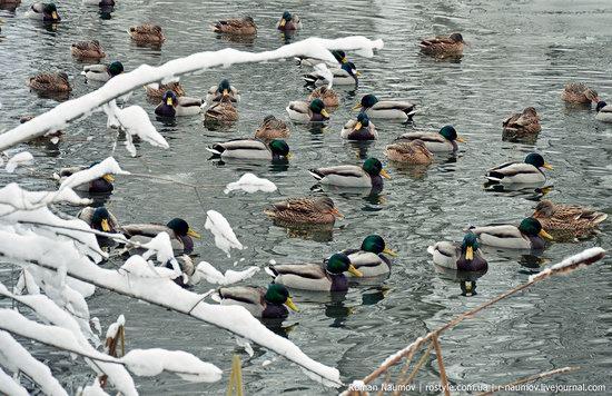 Snowy Alexandria park, Bila Tserkva, Ukraine photo 10