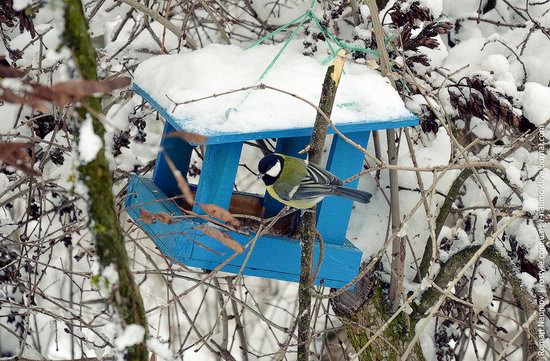 Snowy Alexandria park, Bila Tserkva, Ukraine photo 11