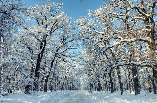 Snowy Alexandria park, Bila Tserkva, Ukraine photo 17