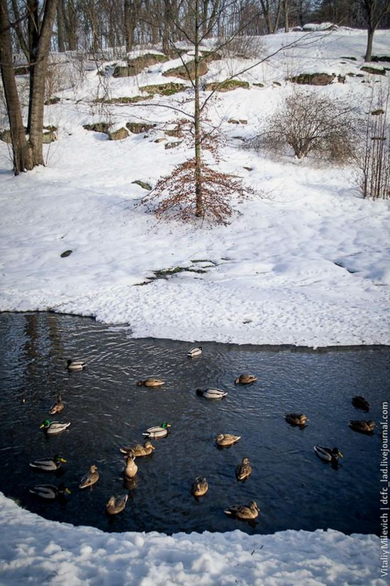 Snow-covered Sofiyivka park, Uman, Ukraine photo 9