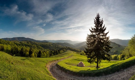 Spring in the Carpathian Mountains, Ukraine photo 1