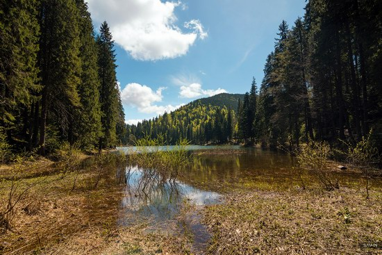 Spring in the Carpathian Mountains, Ukraine photo 17
