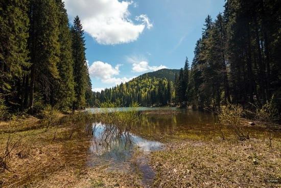 Spring in the Carpathian Mountains, Ukraine photo 17