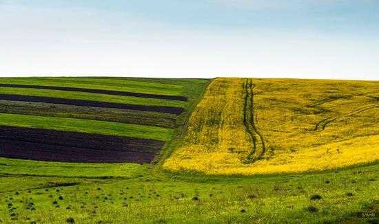 Spring in the Carpathian Mountains, Ukraine photo 2