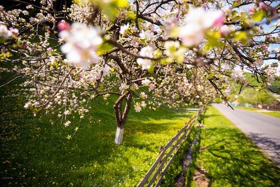 Spring in the Carpathian Mountains, Ukraine photo 5