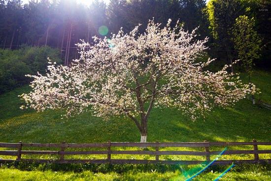 Spring in the Carpathian Mountains, Ukraine photo 6