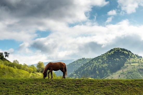 Spring in the Carpathian Mountains, Ukraine photo 7