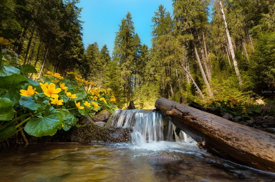 Spring in the Carpathian Mountains, Ukraine photo 8