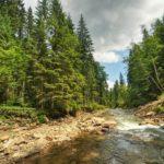 Goverlyansky Reserve in the Carpathian National Park