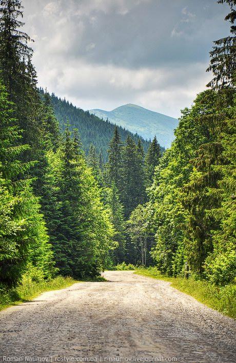 Goverlyansky Reserve - the Carpathian National Park, Ukraine photo 10