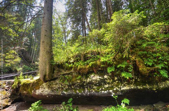 Goverlyansky Reserve - the Carpathian National Park, Ukraine photo 8