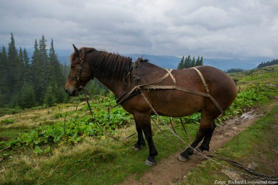 Mystical beauty of the Crpathians, Ukraine photo 18