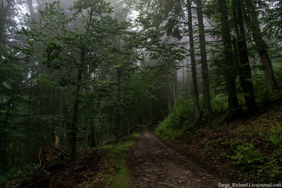 Mystical beauty of the Crpathians, Ukraine photo 2