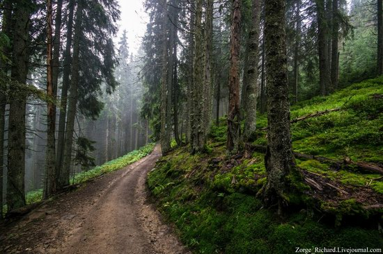 Mystical beauty of the Crpathians, Ukraine photo 21