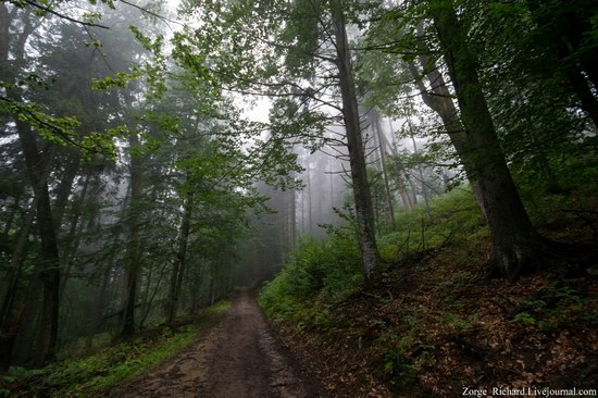 Mystical beauty of the Crpathians, Ukraine photo 4