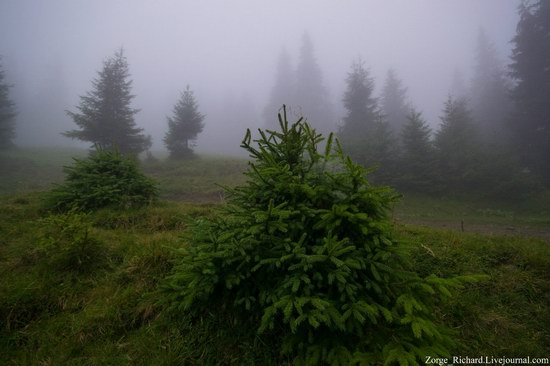 Mystical beauty of the Crpathians, Ukraine photo 7