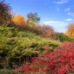 All the Colors of Fall in the Krivoy Rog Botanical Garden