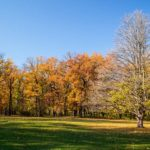 Golden autumn in the most beautiful park of Ukraine
