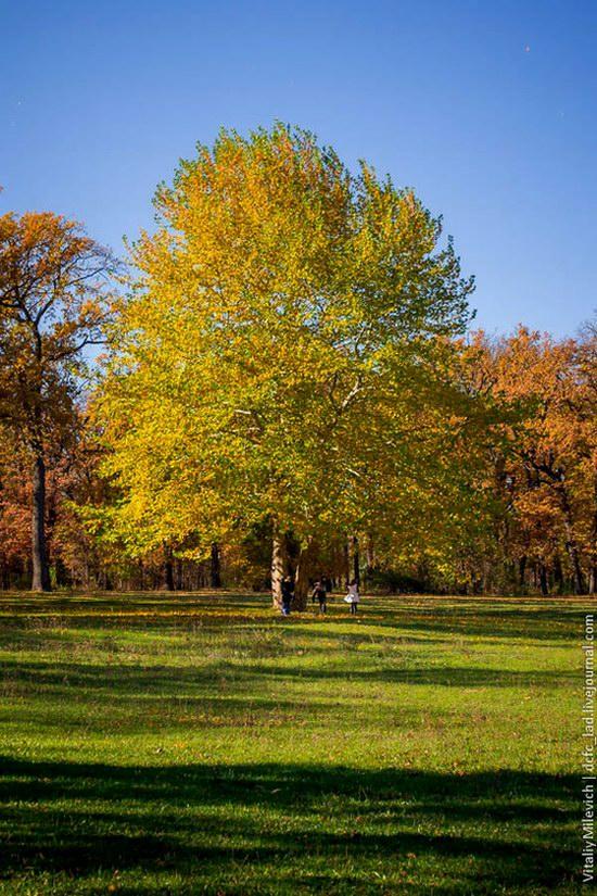 Golden Autumn in Sofiyivka Park, Uman, Ukraine photo 17
