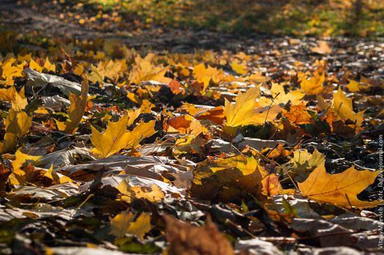 Golden Autumn in Sofiyivka Park, Uman, Ukraine photo 20