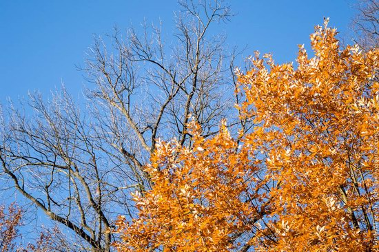 Golden Autumn in Sofiyivka Park, Uman, Ukraine photo 21