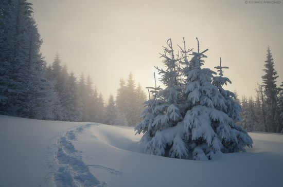 Winter Fairy Tale in the Carpathians, Ukraine, photo 2
