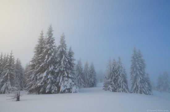 Winter Fairy Tale in the Carpathians, Ukraine, photo 4
