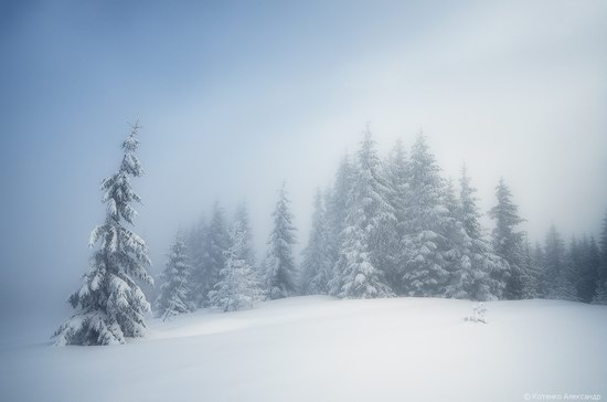 Winter Fairy Tale in the Carpathians, Ukraine, photo 5