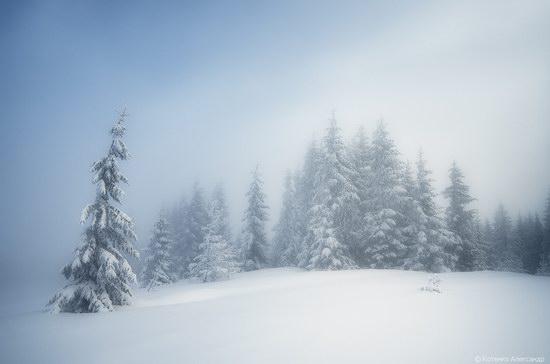 Winter Fairy Tale in the Carpathians, Ukraine, photo 5
