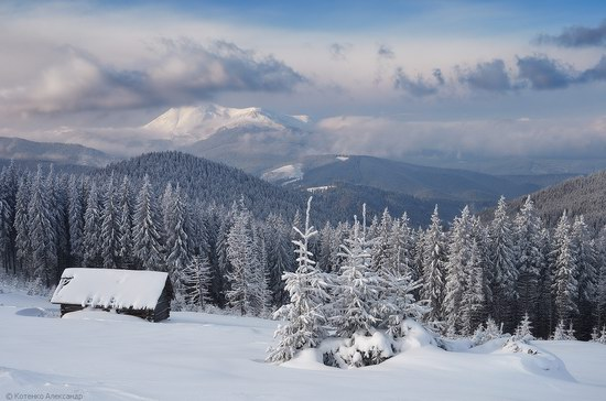 Winter Fairy Tale in the Carpathians, Ukraine, photo 6