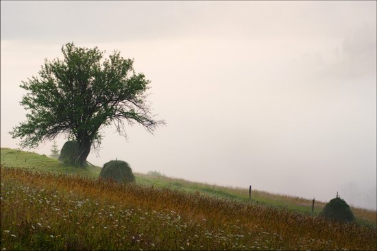 Pastoral Summer Landscapes of Transcarpathia, Ukraine photo 6