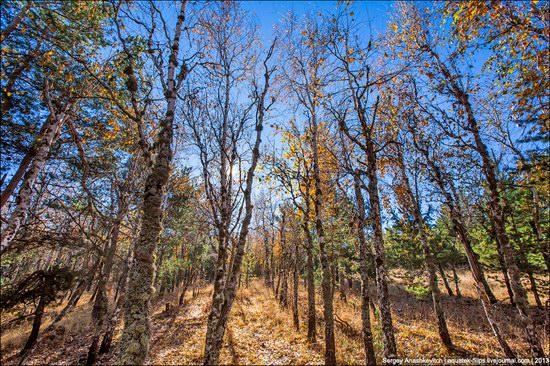 Beautiful fall on Ai-Petri in Crimea, Ukraine, photo 14
