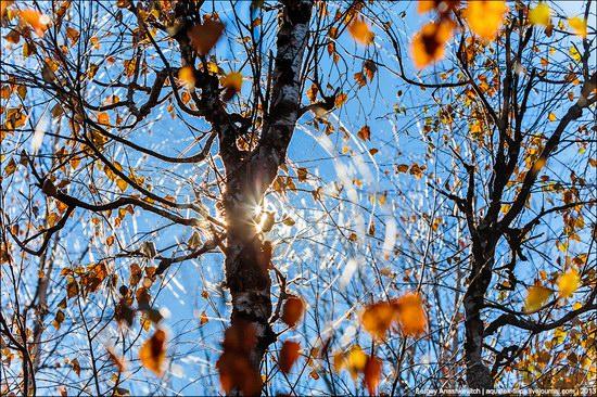 Beautiful fall on Ai-Petri in Crimea, Ukraine, photo 16