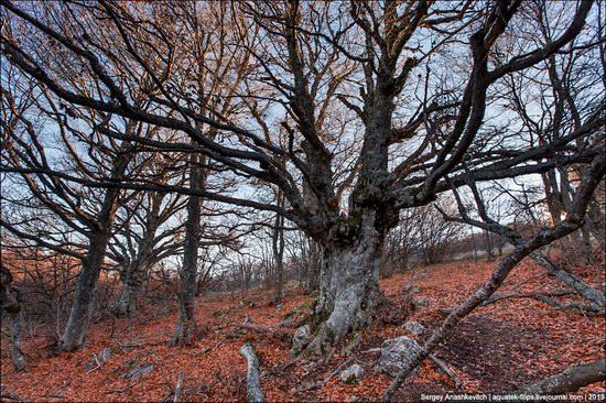 Beautiful fall on Ai-Petri in Crimea, Ukraine, photo 4