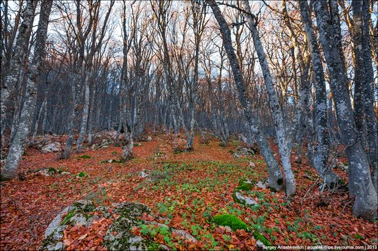 Beautiful fall on Ai-Petri in Crimea, Ukraine, photo 5
