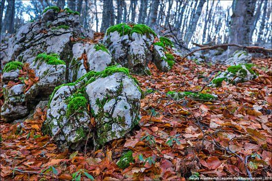 Beautiful fall on Ai-Petri in Crimea, Ukraine, photo 7