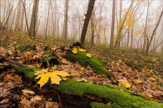 Mokhnach, Kharkov region, Ukraine, photo 6