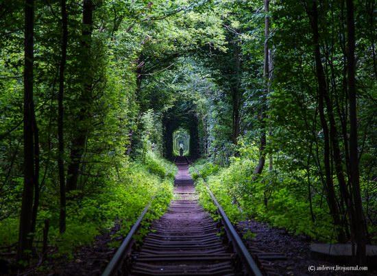 The Tunnel of Love, Rivne region, Ukraine, photo 1