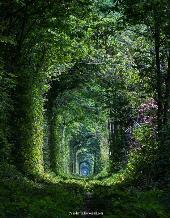 The Tunnel of Love, Rivne region, Ukraine, photo 11