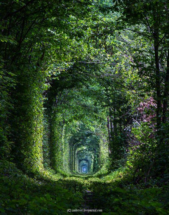 The Tunnel of Love, Rivne region, Ukraine, photo 11